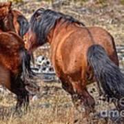 Stallions Gone Crazy Poster