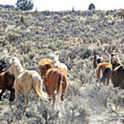 Stampede Of Wild Horses Poster
