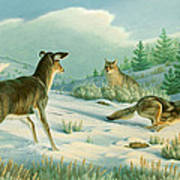 Stand-off  -whitetail Doe And Coyotes Poster