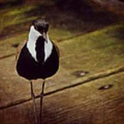 Standing Bird Poster