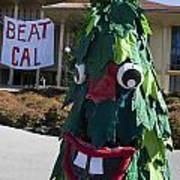 Stanford Tree Mascot Beat Cal Poster