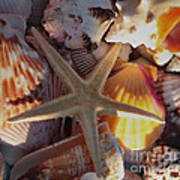 Starfish And Sun Rays Poster