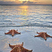 Starfish Beach Sunset Poster