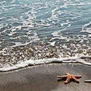 Starfish Catching The Waves Poster