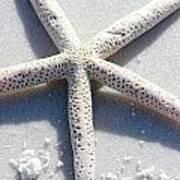 Starfish Poster