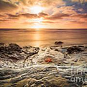 Starfish Sunset Poster