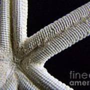 Starfish Underworld Poster