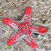 Starfish Wonder Poster