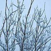 Stark Beauty - Snow On Branches Poster