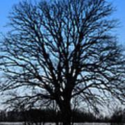 Stark Tree Poster