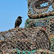 Starling On Lobster Pots Poster