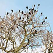 Starlings For Leaves - Sturnus Vulgaris Poster