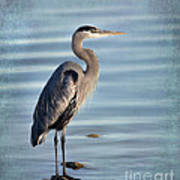 Stately-great Blue Heron Poster