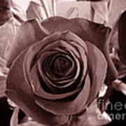 Static Rose Poster
