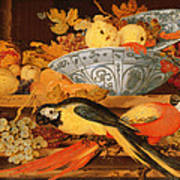 Still Life With Fruit And Macaws, 1622 Poster