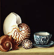 Still Life With Nautilus Poster by Jenny Barron