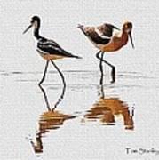 Stilt And Avocet Share The Pond Poster