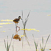Stilt Chick Exploring Its New World Poster