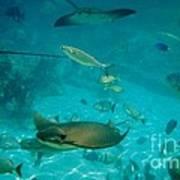 Stingray And Fish Poster
