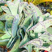 Stippled Cactus Poster
