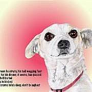 Stitch - A Shelter Sweetie Poster
