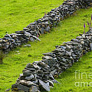 Stone Fences In Ireland Poster