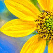 Stone Mountain Yellow Daisy Details - North Georgia Flowers Poster