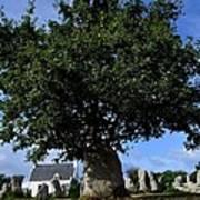 Stone tree Poster
