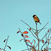 Stonechat Poster