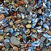 Stones And Seashells Poster