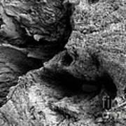 Stonewood Canyon - Bw - Wonderwood Collection - Olympic Peninsula Wa Poster