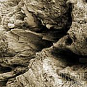 Stonewood Canyon - Square - Sepia Tone - Wonderwood Collection - Olympic Peninsula Wa  Poster