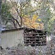 Storage Shed In Color Poster