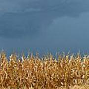 Stormy Corn Poster