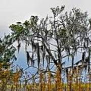 Stormy Marsh Cedar Tree Poster