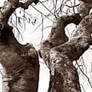 Story Tree Poster by Jennifer Apffel