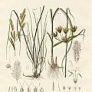 Strange Grasses Poster