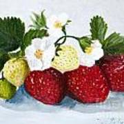 Strawberries With Blossoms Poster