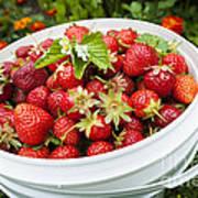 Strawberry Harvest Poster