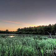 Streaky Swamp Sunrise Poster