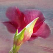Striking Hibiscus Flower Poster