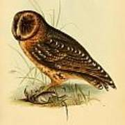 Strix Owl Poster