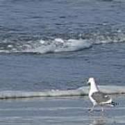 Strutting Seagull Poster