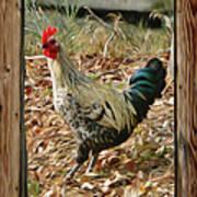 Studio Window Rooster Poster