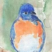 Study Of A Bluebird Poster