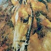 Study Of A Horse's Head Poster