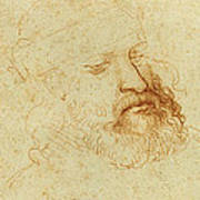 Study Of A Male Head Poster