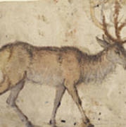 Study Of A Stag Recto,  Study Of Goats Verso Lucas Cranach Poster