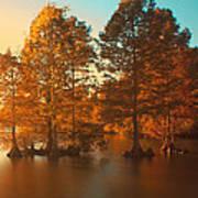 Stumpy Sunset Poster