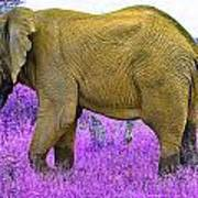 Styled Environment-the Modern Elephant Bull Poster